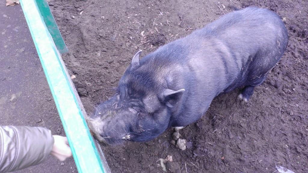 И лишь свинья привередничает - ей подавай только сухари